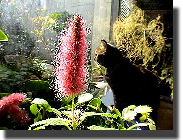 cattail-and-cat11-16